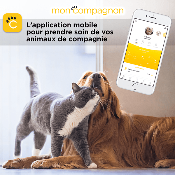 application mobile mon compagnon